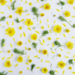 Flower pattern of yellow flowers. Abstract floral summer background. - 151002589