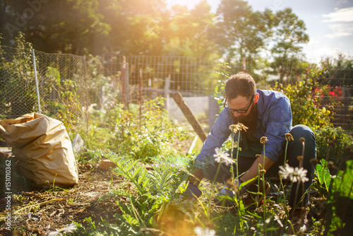 Foto Murales man planting crops in communal garden