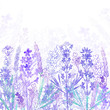 Floral background with  lavender flowers and place for text. Watercolor illustration on a white background. Invitation, greeting card or an element for your design.