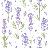 Seamless vector pattern with lavender flowers. Floral  illustration on white background. - 151028176