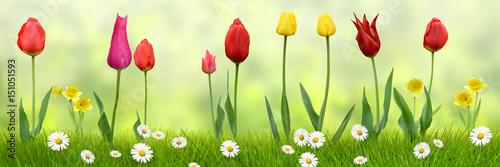 Frühling 438