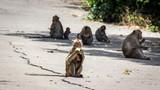 Jungle Monkey Group