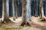 Gespensterwald in Nienhagen an der Ostsee