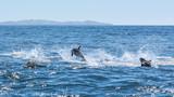 Delfine in Kaikoura in Neuseeland (New Zealand)