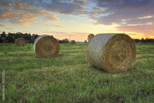 Hay bales in the Hawkesbury fields with a pretty sunrise sky behind Poster