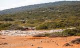 Donkey roaming free in Karpaz (Karpas) Cyprus