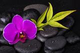 orchidea con sassi neri - 151284124