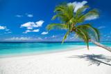 coco palm on tropical paradise island dream beach - 151310725