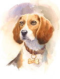 Watercolor Dog Beagle Portrait - Hand Painted Animals Pets Illustration isolated on white background - 151316342