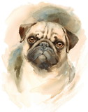 Watercolor Dog Pug Portrait - Hand Painted Illustration of Pets - 151316703