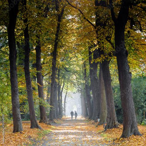 Fotobehang Antwerpen Middelheim park