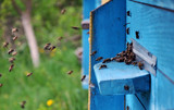 The bees from nectar and pollen flies to the beehive cell