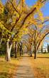 Park walkway in Edmonton, Alberta, Canada, during Autumn.