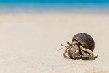 Hermit crab on  tropical beach - 151381377
