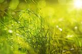 Sattes Gras mit Bokeh im Gegenlicht