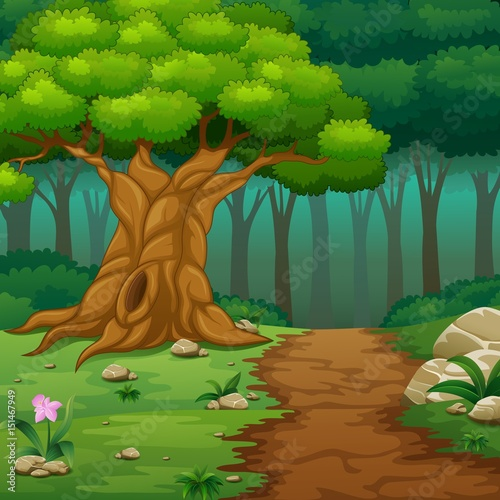 Papiers peints Vert Forest background with dirt road