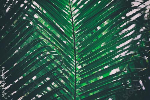 Palm leaves in botanical garden - 151507768