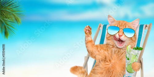 Poster Cat wearing sunglasses relaxing sitting on deckchair in the sea background