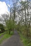 Chemins en terre dans le bois au parc des Sources à Woluwe-St-Pierre