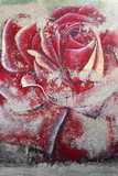 Faded image of big red garden rose flower. Kas-Lycia-Turkey. 1759