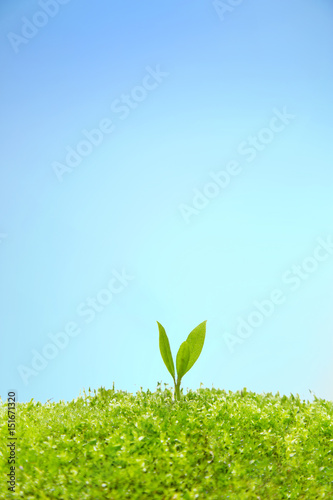 苔に生える双葉の成長と環境イメージ Plakát