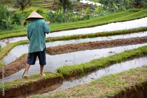 Staande foto Rijstvelden Back view of worker on rice field