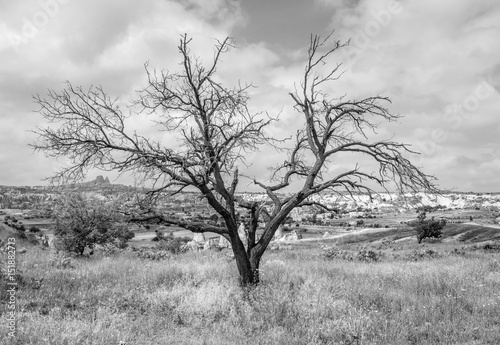 A dead tree. Cappadocia in Central Anatolia is a UNESCO World Heritage Site since 1985, Turkey (black and white) - 151882713