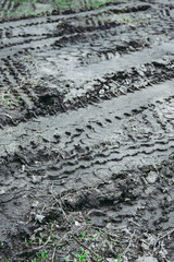 Tire tracks on a muddy road.