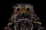 Portrait of a wolf spider magnified 10 times. Real life frame width is 2.2mm. - 151956135