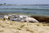 Environmental problem dolphins are dying