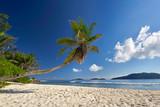 Palmen am Strand - paradiesisch