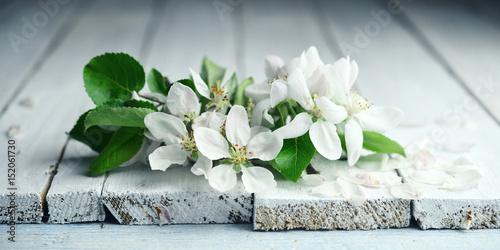 kwiaty jabłoni na starej jasnej desce