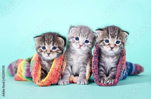 Drei kleine Katzenbabys in Strümpfen Poster