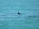 Dolphins in Florida's water