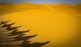 Camel Tour in the Sahara Desert, Morocco