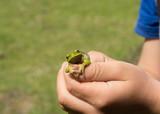 green little frog in children's hands