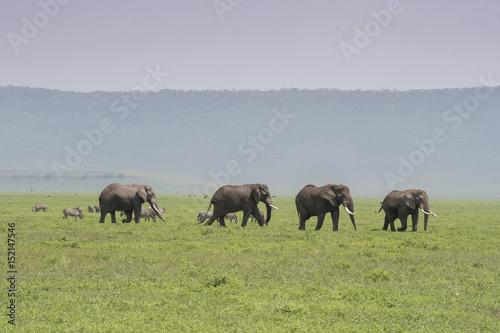 Poster Elephant Parade