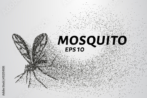 The mosquito of the particles. The mosquito consists of small circles and dots. Vector illustration. - 152154108