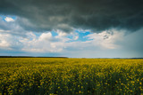 Stormy rape field