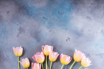 Row of pink and yellow fresh tulips on gray stone background