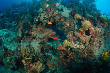 Wide angle of bright underwater coral reef