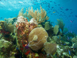 Tropical coral reef with golden sea fan and school of small blue fish