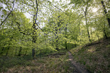 Springtime in a Danish forest - 152278980