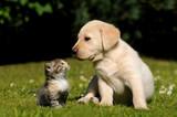 Puppy. Kitten.