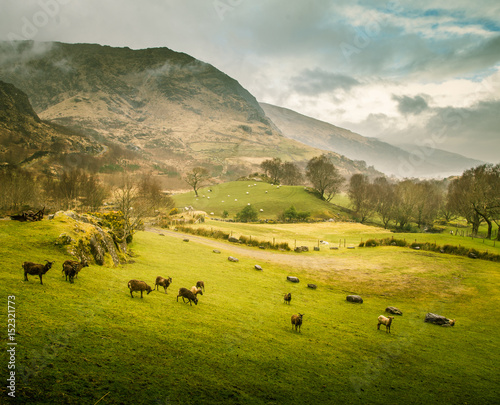 A beautiful irish mountain landscape in spring with sheep. Gleninchaquin park in Ireland.
