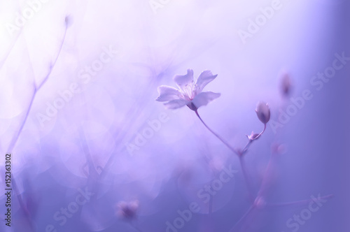 Foto op Canvas Violet Small delicate flowers on a beautiful background. Selective focus
