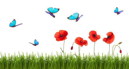 Summer background with poppies and butterflies.