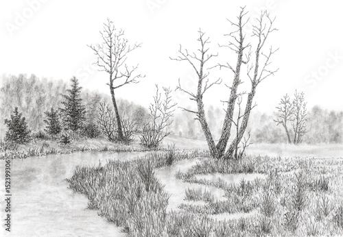 trawiaste-bagno-ze-strumieniem-i-drzewami