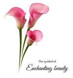 Нежные цветы, розовая калла. Символ чарующей красоты.