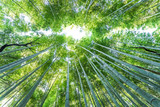 Kyotos famous bamboo forest